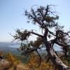 дерево)