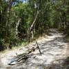 Дорожка по горному лесу